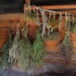 herbs-478060_A