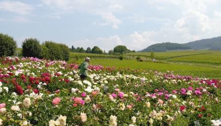 Alte Gärten auf dem Land: Grüne Kleinode in Baden-Württemberg und Rheinland-Pfalz