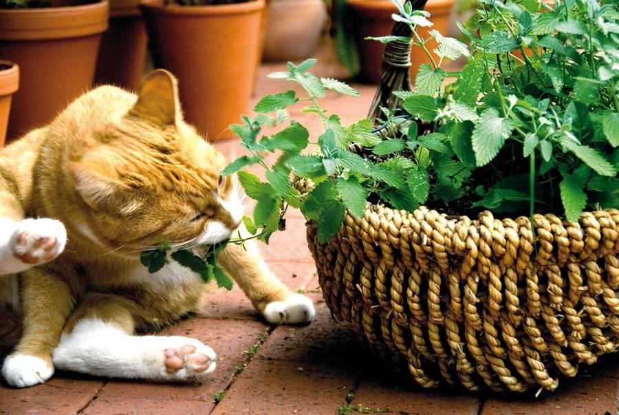 Ein Kräutergarten für die Katz