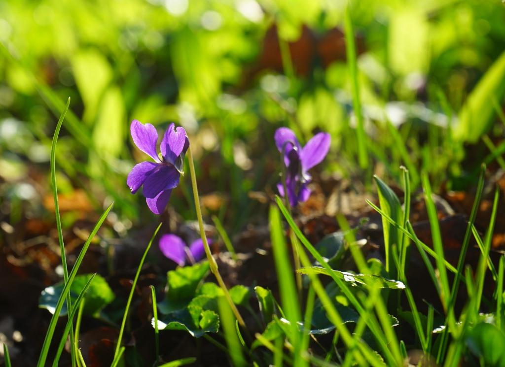 Wilde Frühlingskräuter
