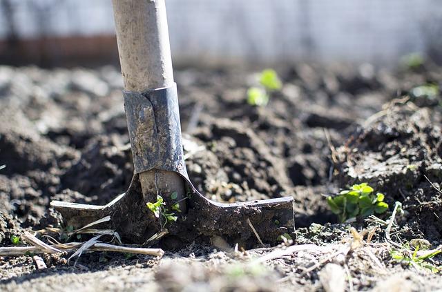 Sonder-Einsatz im Kartoffelgarten