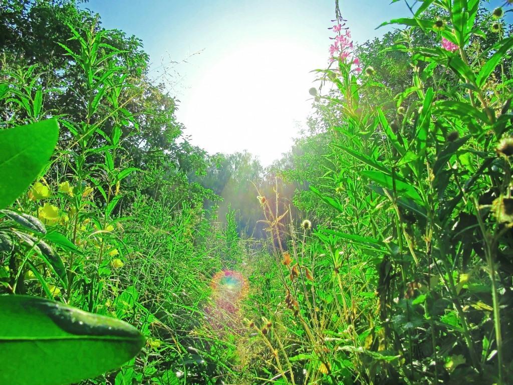 Wildpflanzen richtig sammeln