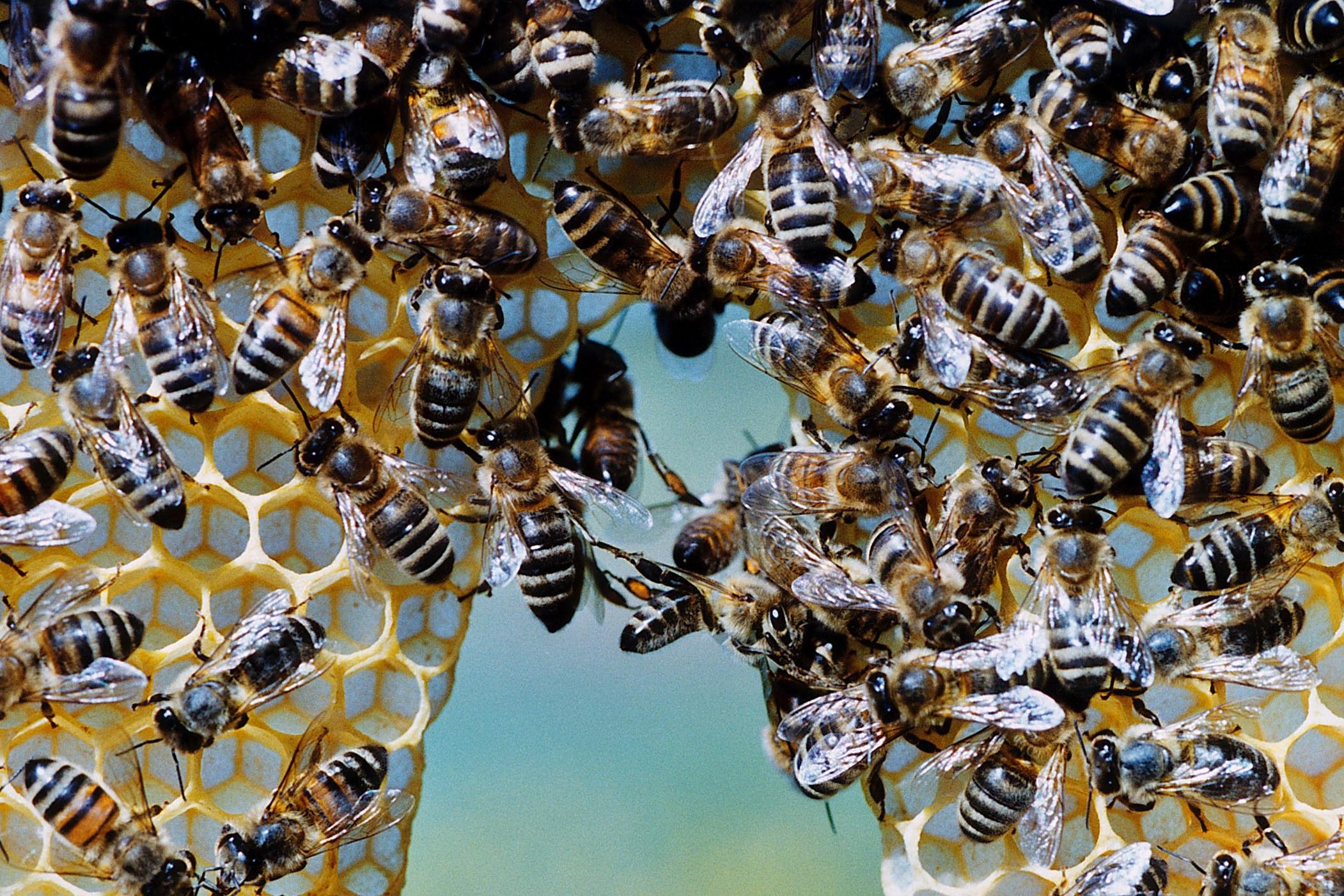 Antibakterielle Wirkung von heimischem Demeter-Honig nachgewiesen