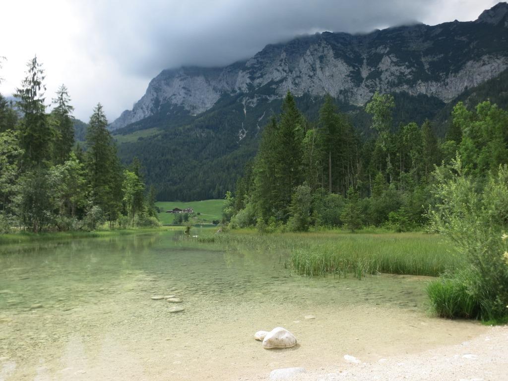 Wildkräuter-Medizin-Walks